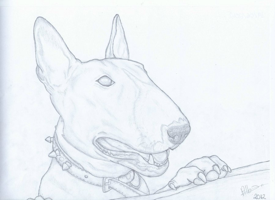 900x654 Bull Terrier Drawing (Syra) By Alba13dragon