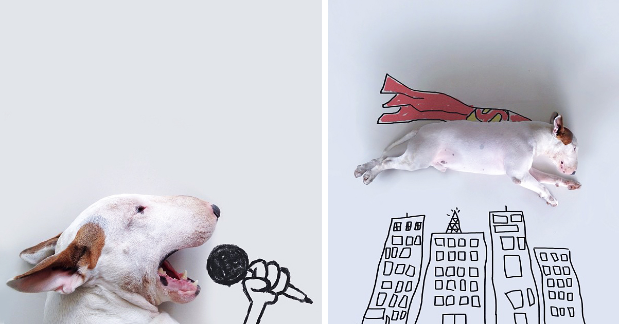 1203x631 Dog Owner Creates Fun Illustrations With His Bull Terrier Bored