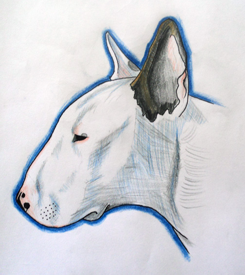 504x566 Fib A Bit Bull Terrier Drawing By Paskaniska