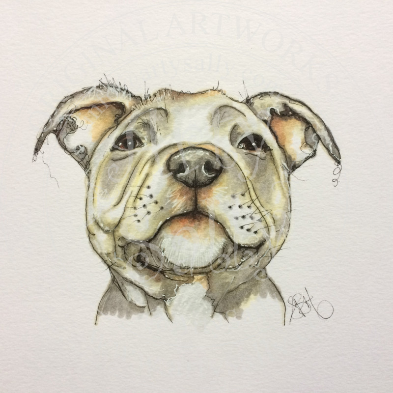 800x800 Staffordshire Bull Terrier Drawing