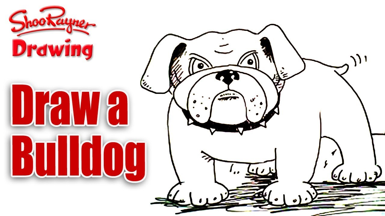 1280x720 Copy Of How To Draw A Bulldog