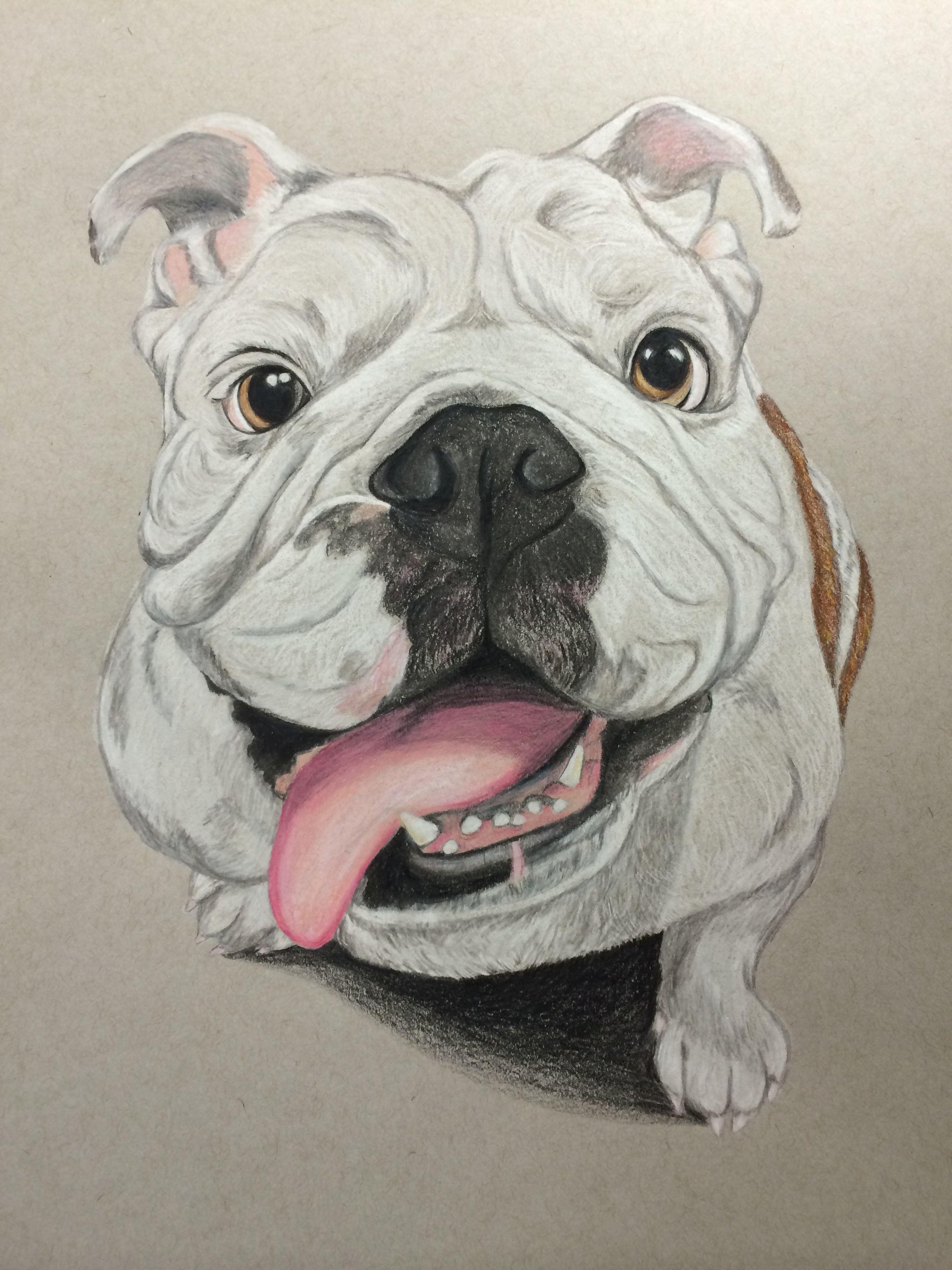 2448x3264 Bulldog