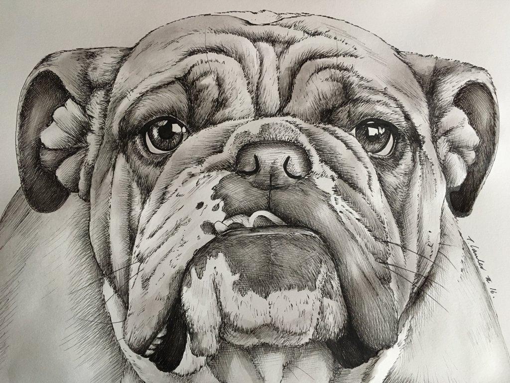 1024x768 Bulldog Pen And Watercolour Drawing Dog By Billyboyuk