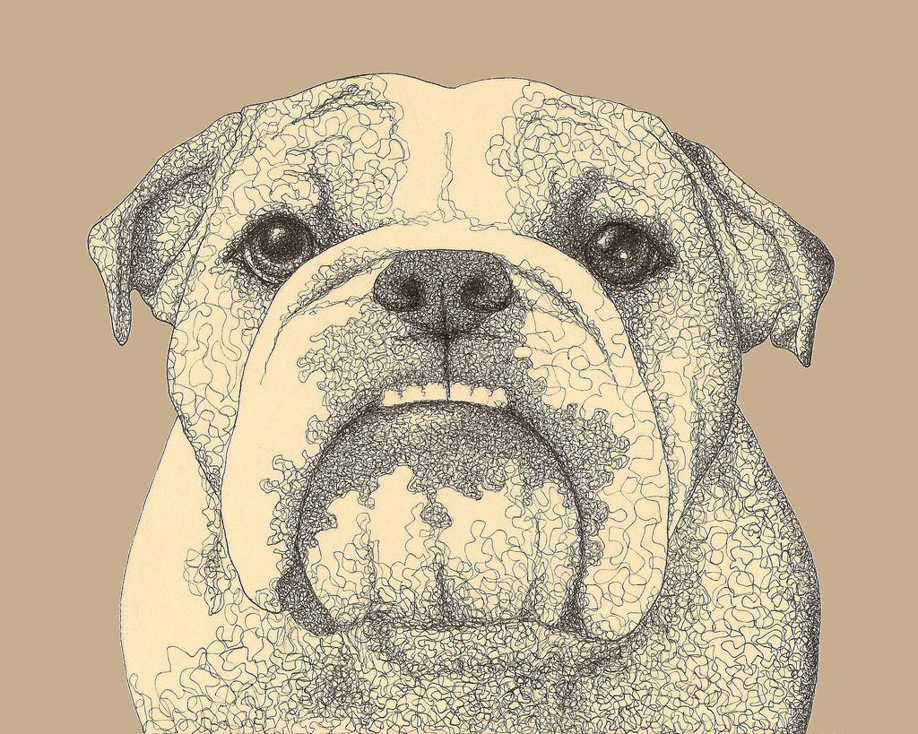 1024x819 Bulldog Drawing Erinkejo