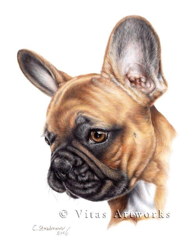 600x783 French Bulldog Drawing By Vitasartworks