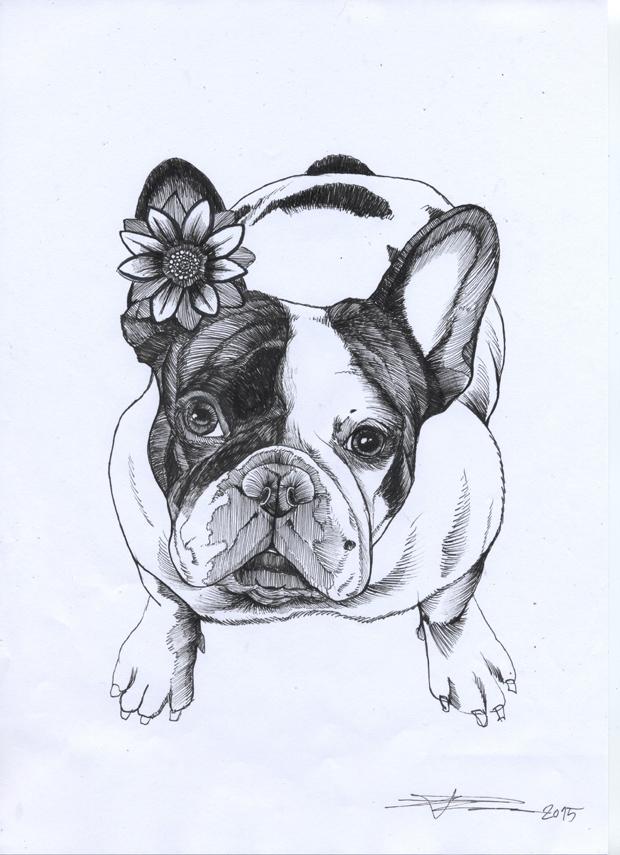620x855 Frenchie , French Bulldog , Cute Dogs Monochrome(Bw