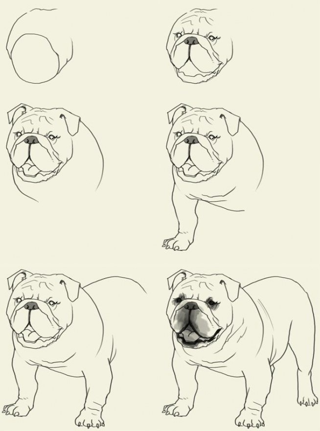 654x881 How To Draw A Bulldog . ~~ Step By Step Step By Step.