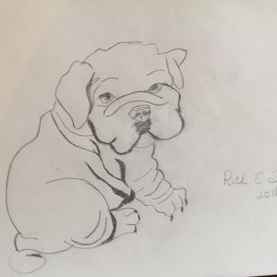 400x400 First Wrinkle Puppy Drawing