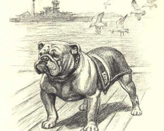 340x270 Bulldog Sketch Etsy