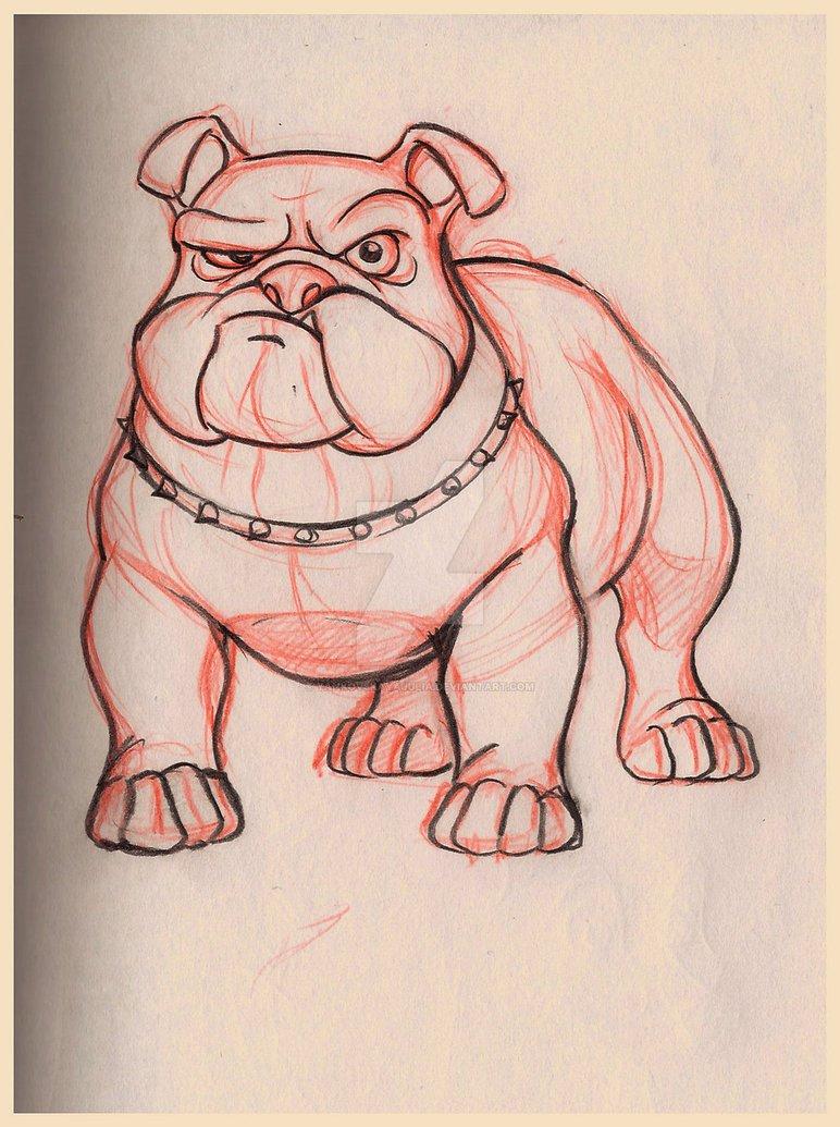 772x1035 English Bulldog
