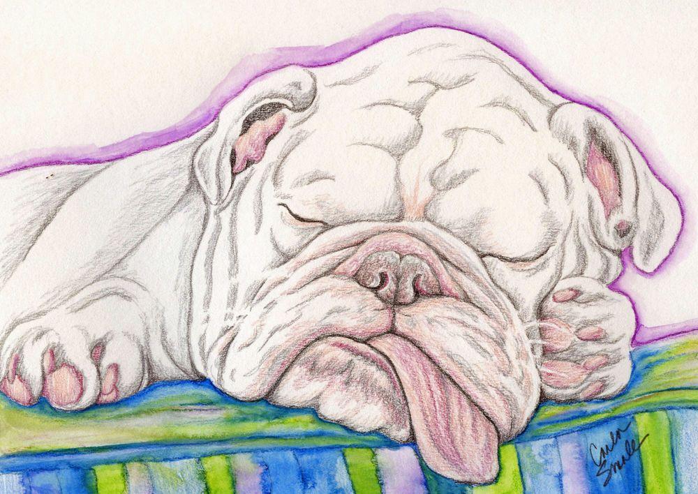 1000x708 Sleepy English Bulldog Dog Art Original Pencil Drawing Painting