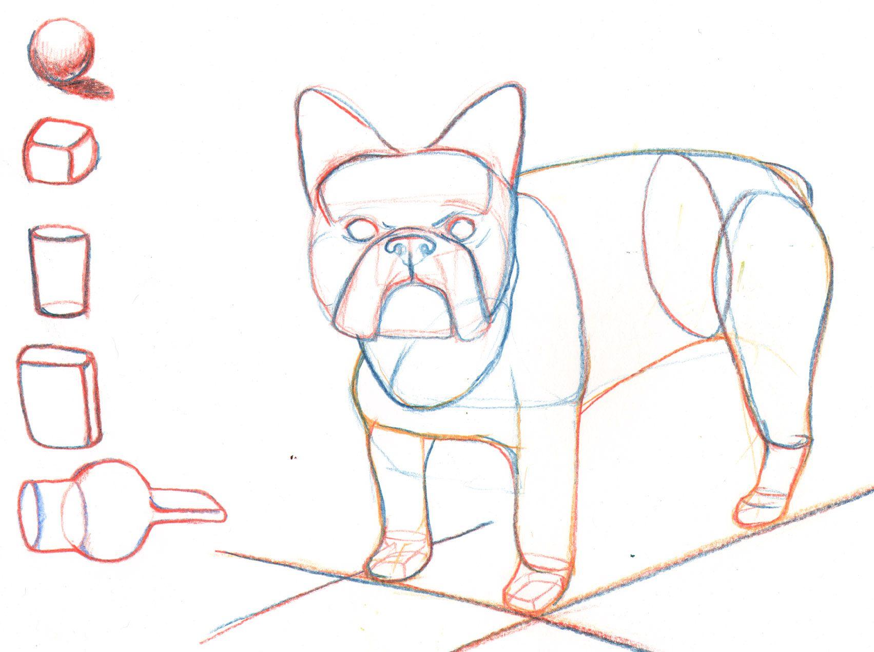 1703x1270 French Bulldog Draw