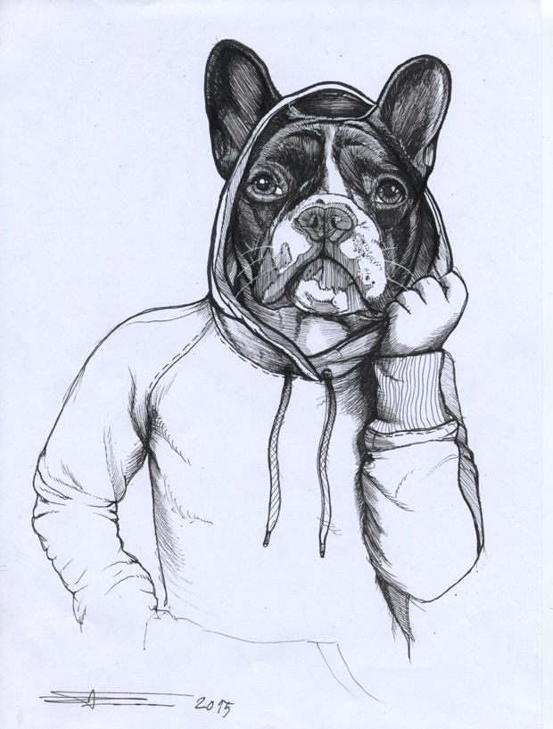 620x817 176 Best French Bulldog Images On French Bulldogs