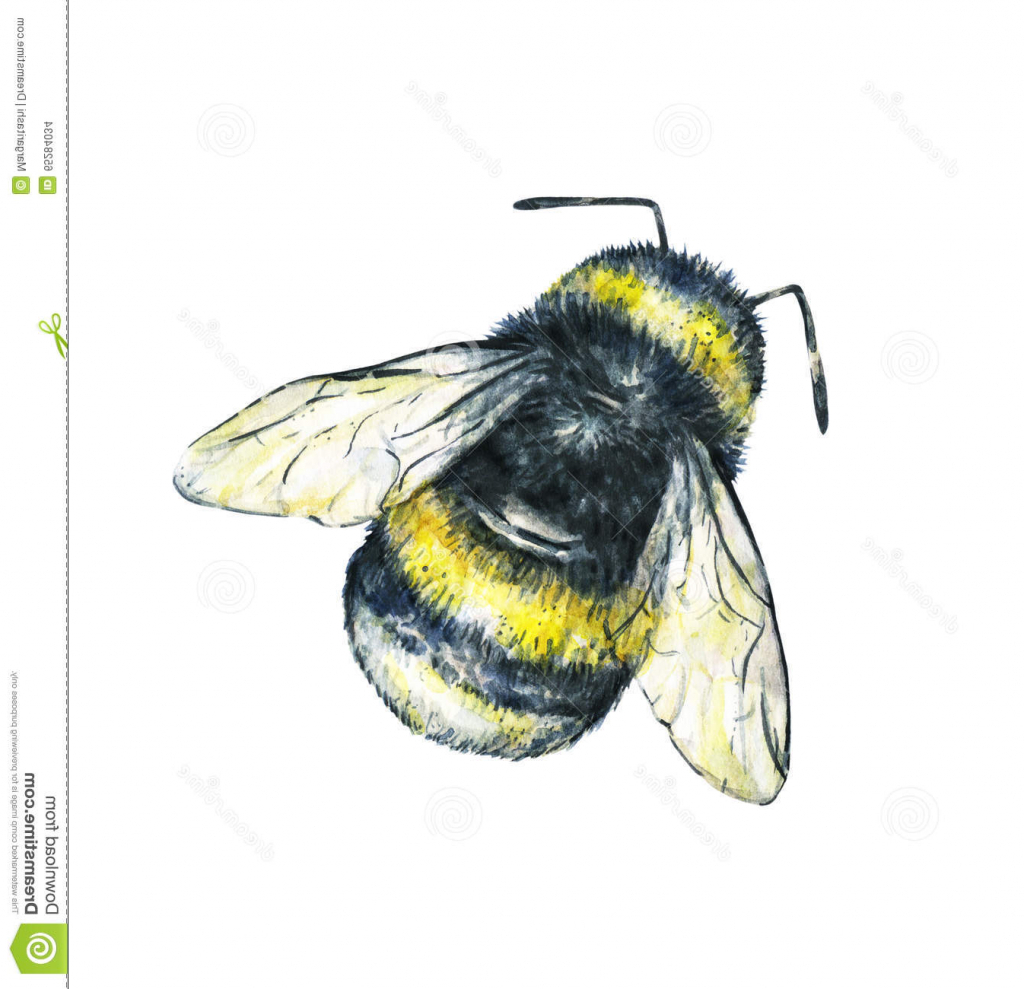 1024x989 Drawing Of A Bumble Bee Bumble Bee Drawing Pictures Seamless