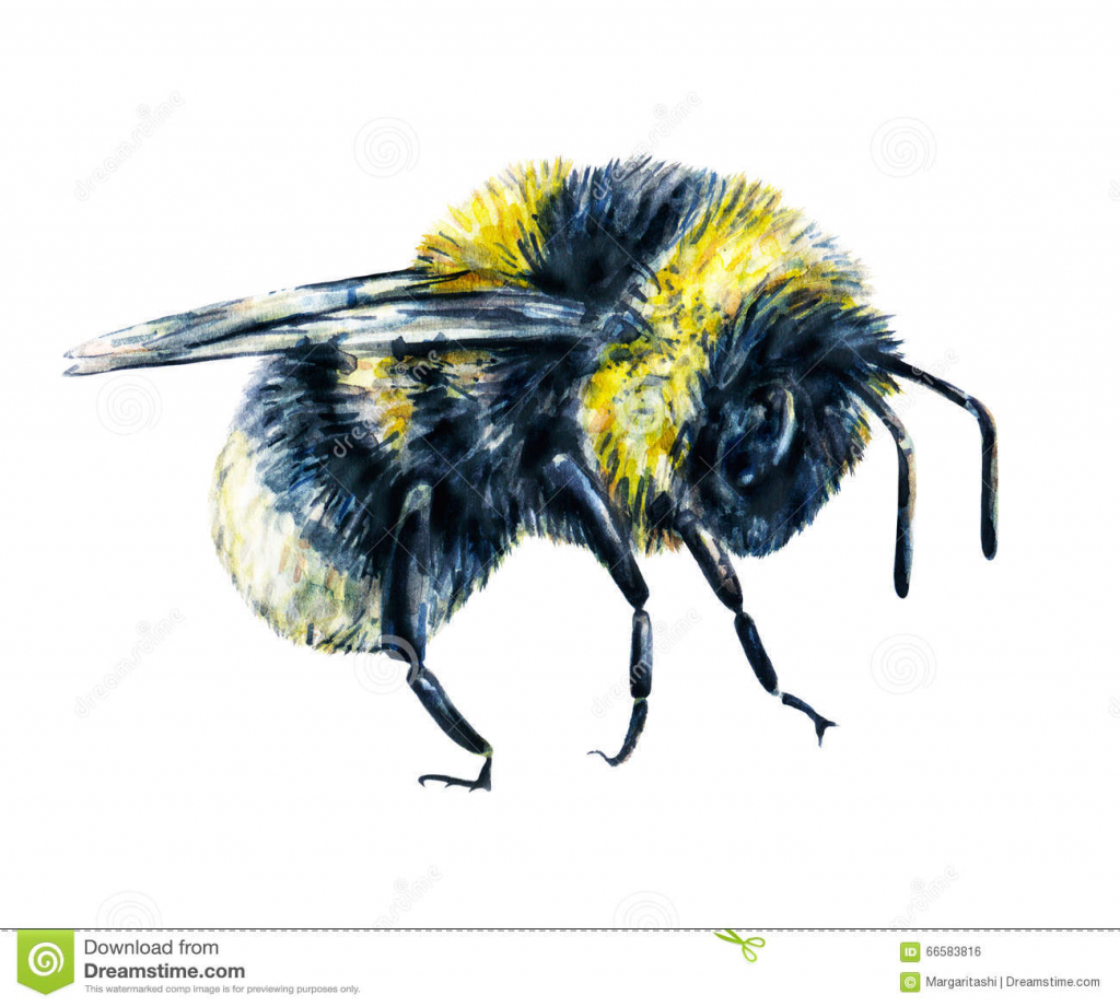 1024x920 Drawing Of Bumble Bee Drawn Bee Bumble Bee