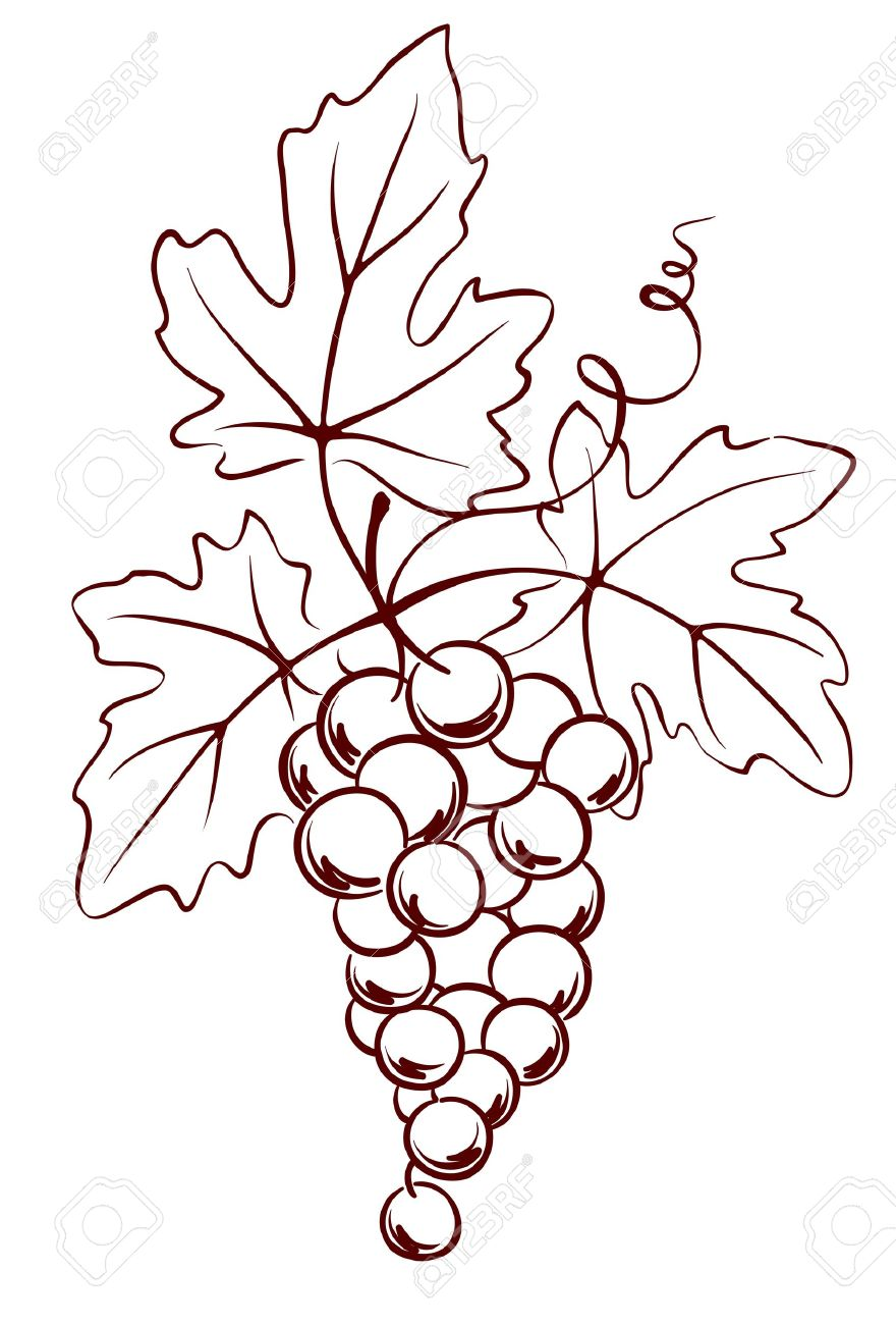880x1300 Bunch Of Grapes With Leaves Royalty Free Cliparts, Vectors,