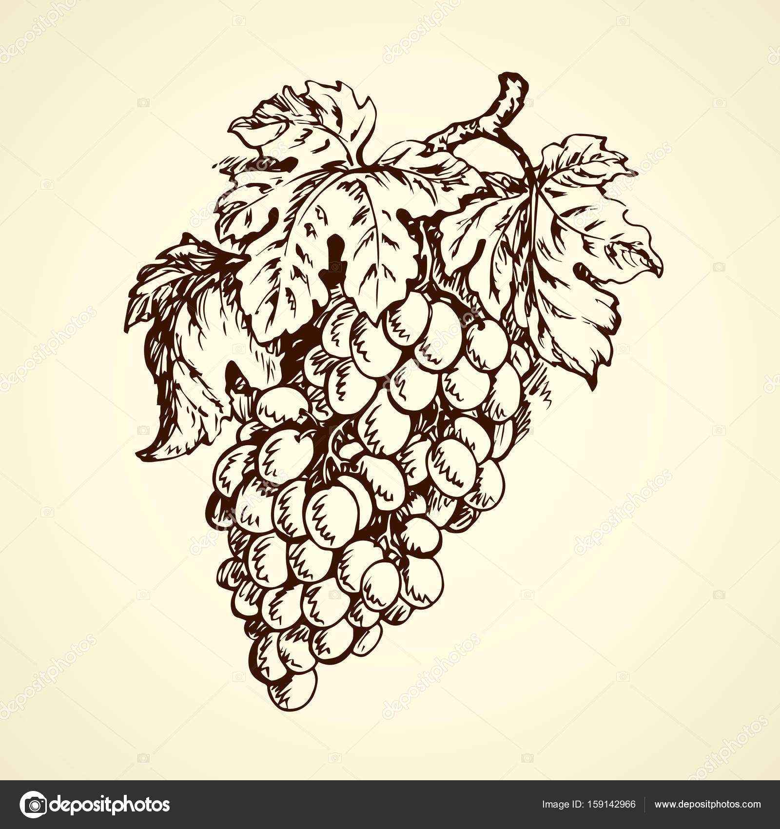 1600x1700 Bunch Of Grapes. Vector Drawing Stock Vector Marinka