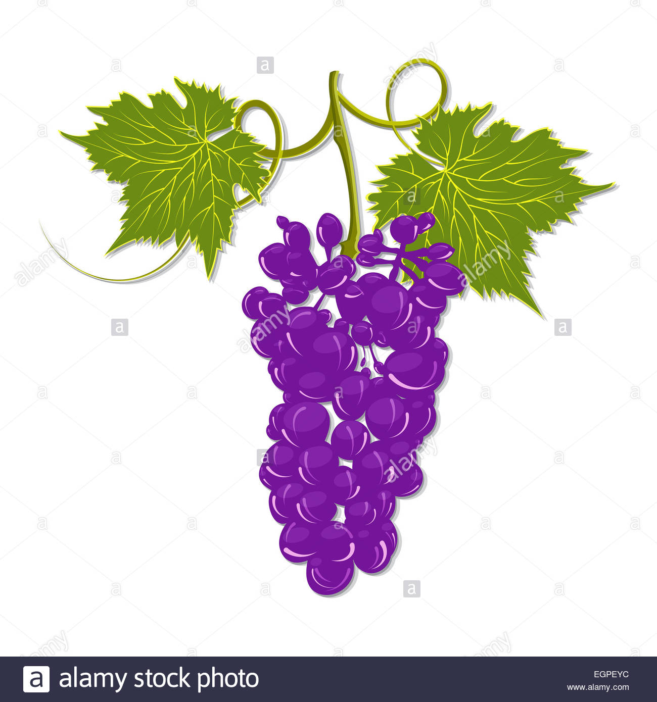 1300x1390 Hand Drawing A Bunch Of Grapes With Leaves On A White Background
