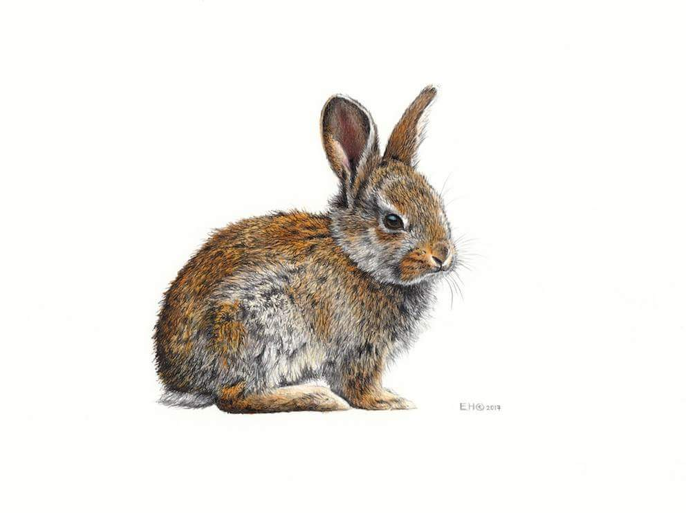 992x742 Bunny Drawing By Esthervanhulsen