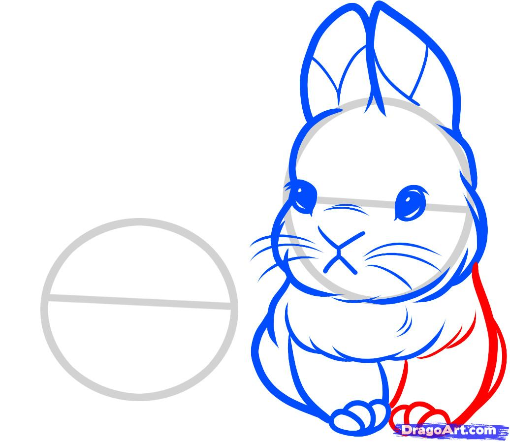 1036x898 How To Draw A Bunny Face How To Draw Baby Rabbits, Baby Rabbits