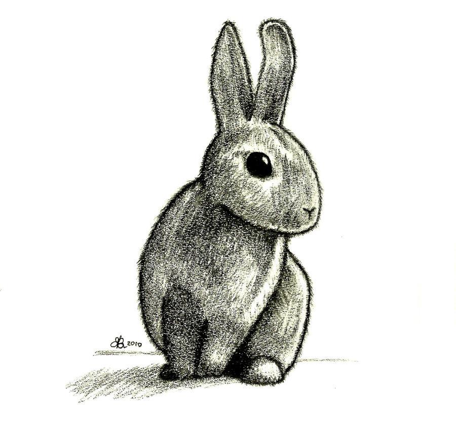 900x834 Rabbit Drawing By Aquarius Galuxy