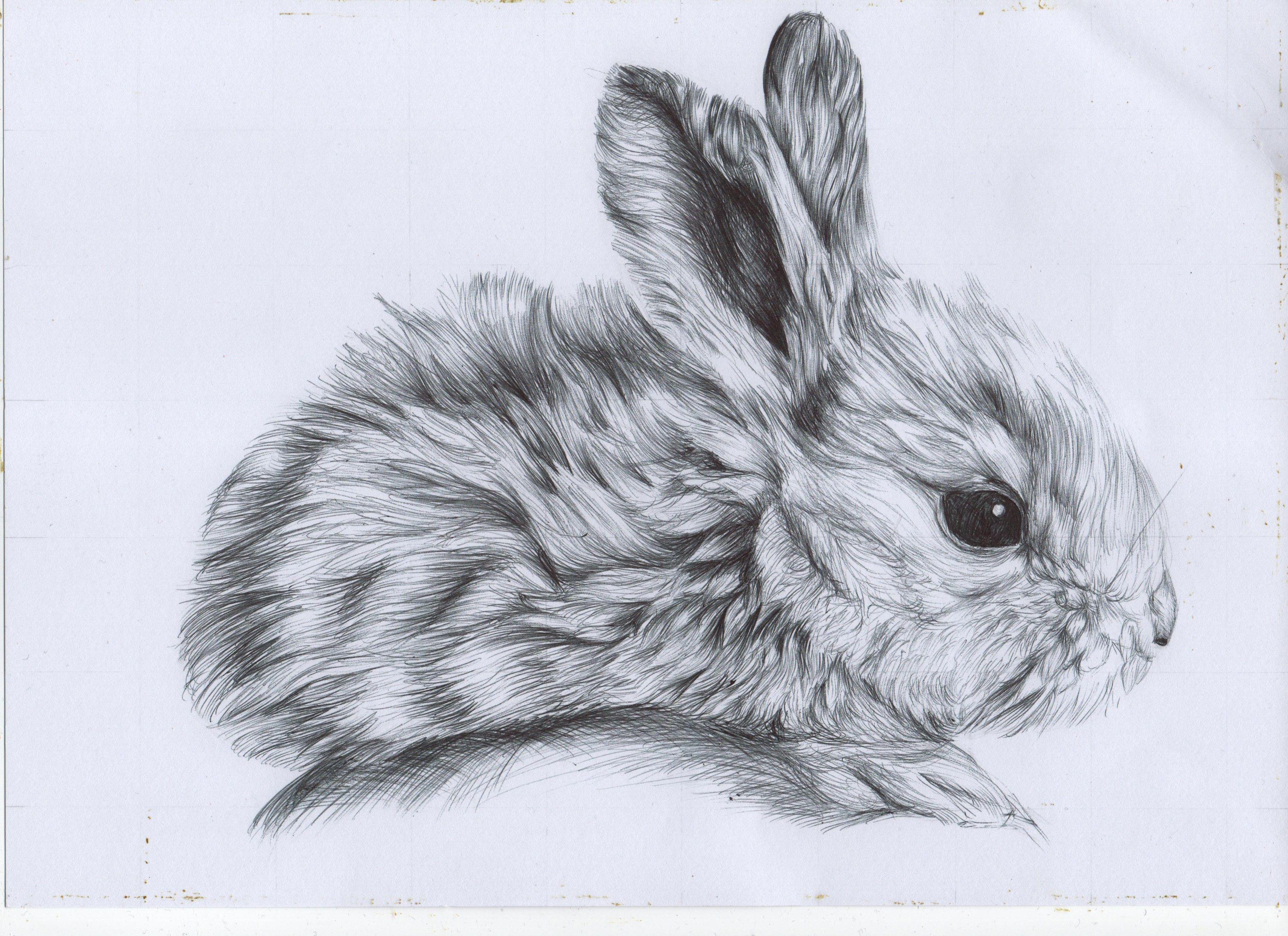 3509x2549 Bunny Biro Drawing Tattoo Two Bunny, Bunny Rabbit
