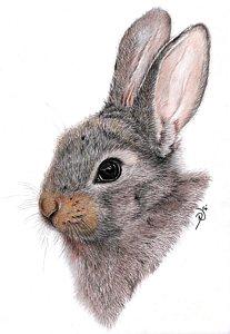 207x300 Bunny Rabbits Drawings