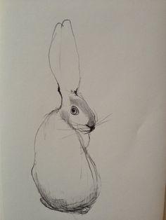 236x314 Rabbit Drawings