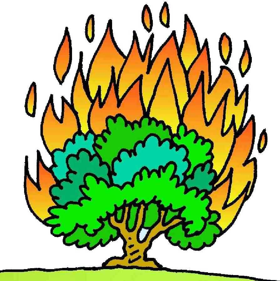 894x899 Burning Bush Clipart