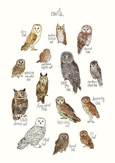 389x550 A Chart Featuring The Barn Owl, Barred Owl, Short Eared Owl, Long