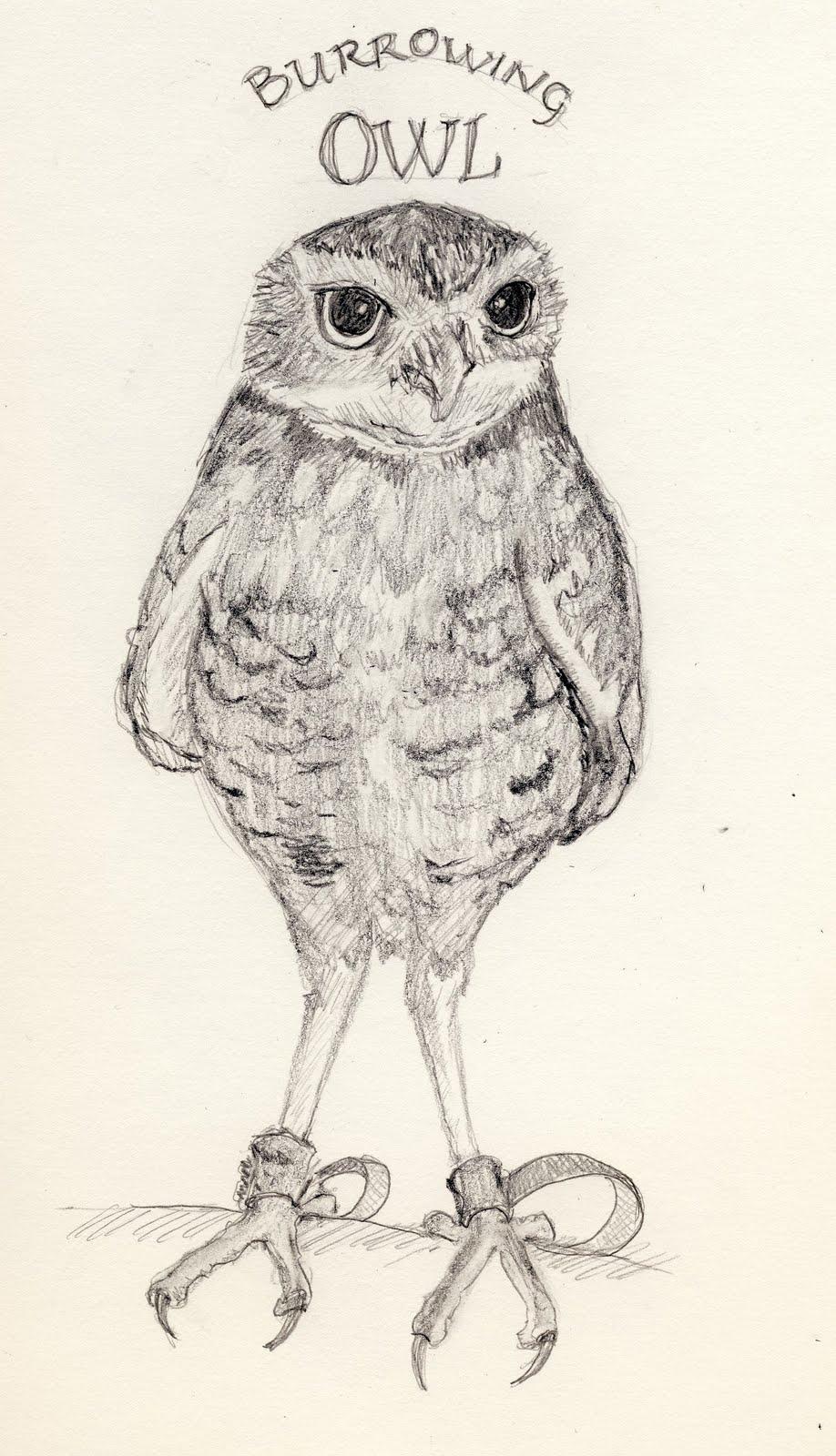 918x1600 Birdly Drawn Athene Cunicularia Burrowing Owl