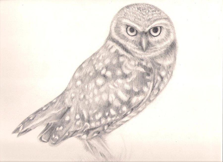 900x654 Burrowing Owl By Bobafett1138