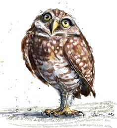 236x260 Burrowing Owl With Attitude Pen And Ink Print By Henny2pence