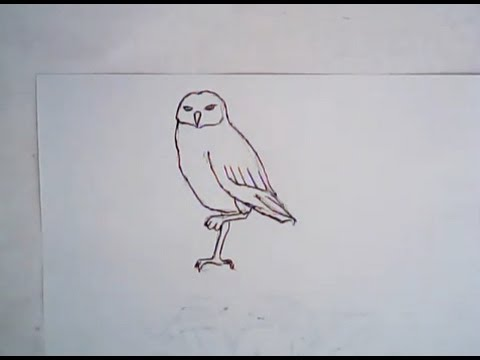480x360 How To Draw A Burrowing Owl (Simple Drawing)