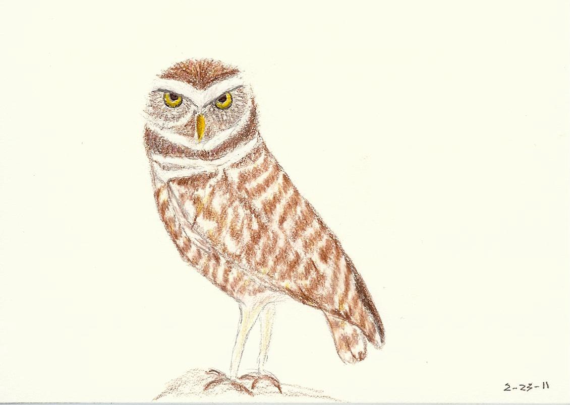 1130x804 Owl Darshan Helens22's Weblog
