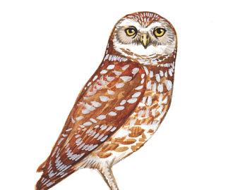340x270 Owl Painting Owl Art Owl Print Burrowing Owl Burrowing Owl