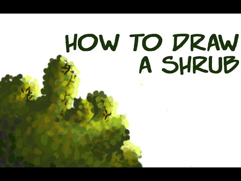 480x360 Art Tutorial How To Draw A Shrubush (For Tablet Users) (Test