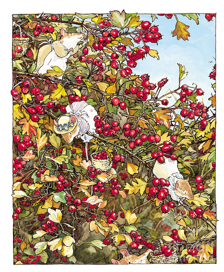 741x900 The Blackthorn Bush Drawing By Brambly Hedge