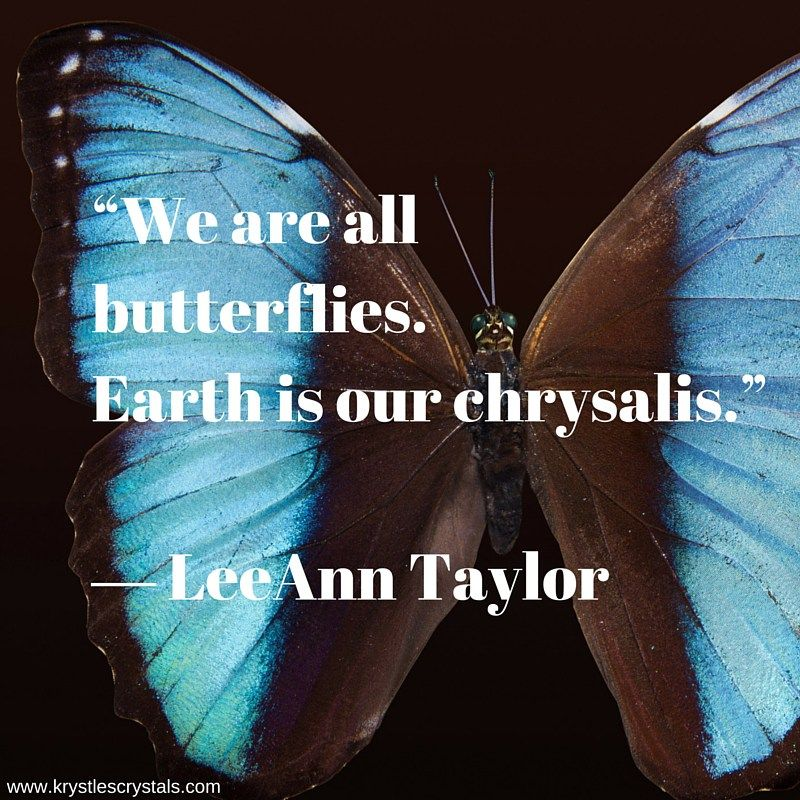 800x800 Butterfly Images, Butterfly Quotes, Butterfly Images, Butterfly