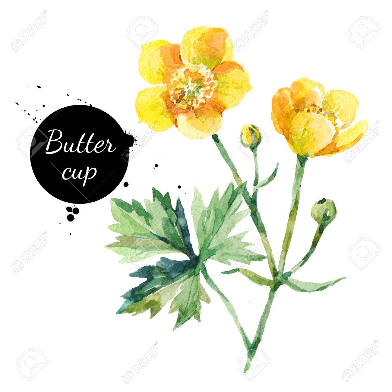 1300x1300 Hand Drawn Watercolor Yellow Buttercup Flower Illustration