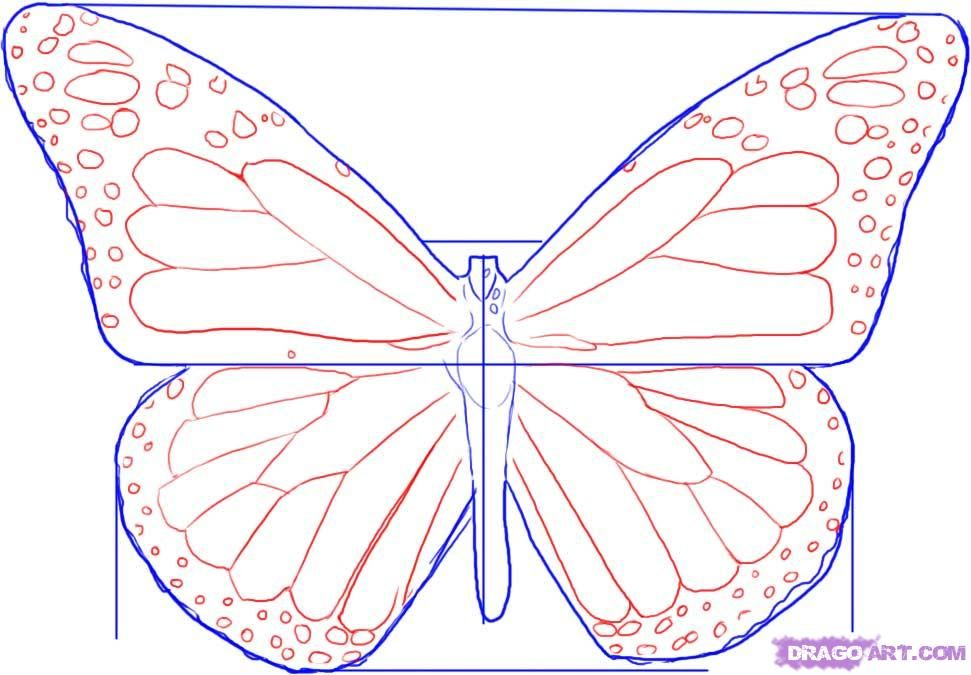 971x675 How To Draw A Monarch Butterfly How To Draw Tutorials