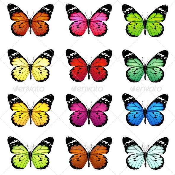 590x590 Colorful Butterfly Pictures To Print Coloring Pages