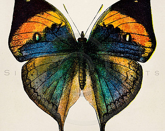 340x270 Vintage Butterfly Drawing Etsy
