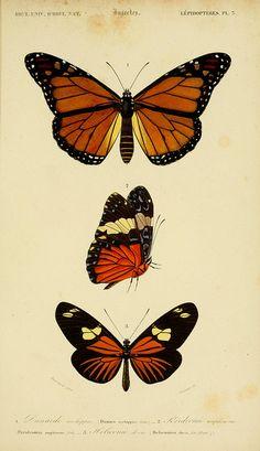 236x409 Butterfly Gifs Butterflies, Beautiful Butterflies