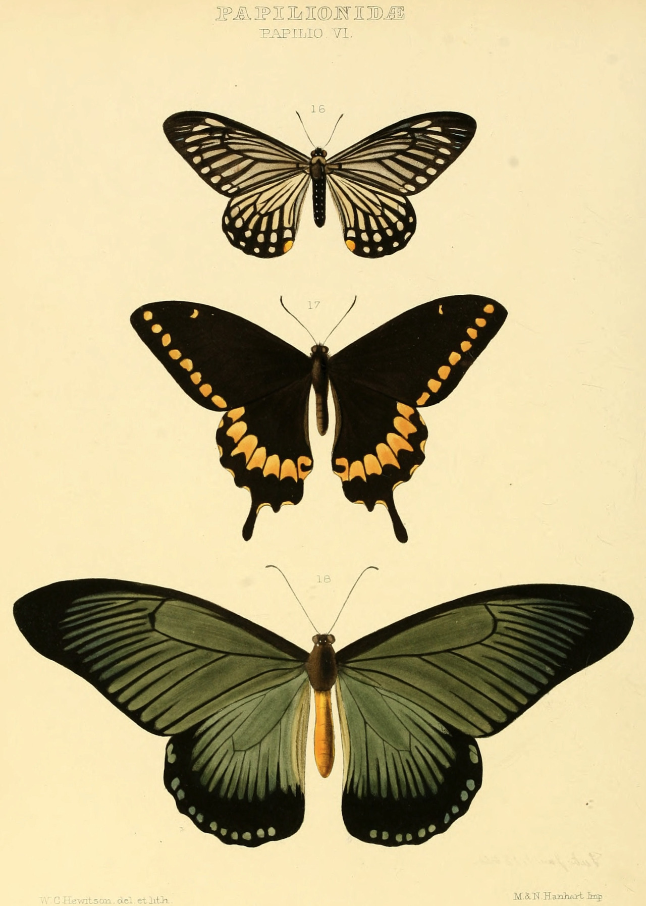 1280x1795 Magictransistor Papilonidae Papilio Cabinet Of Curiosities