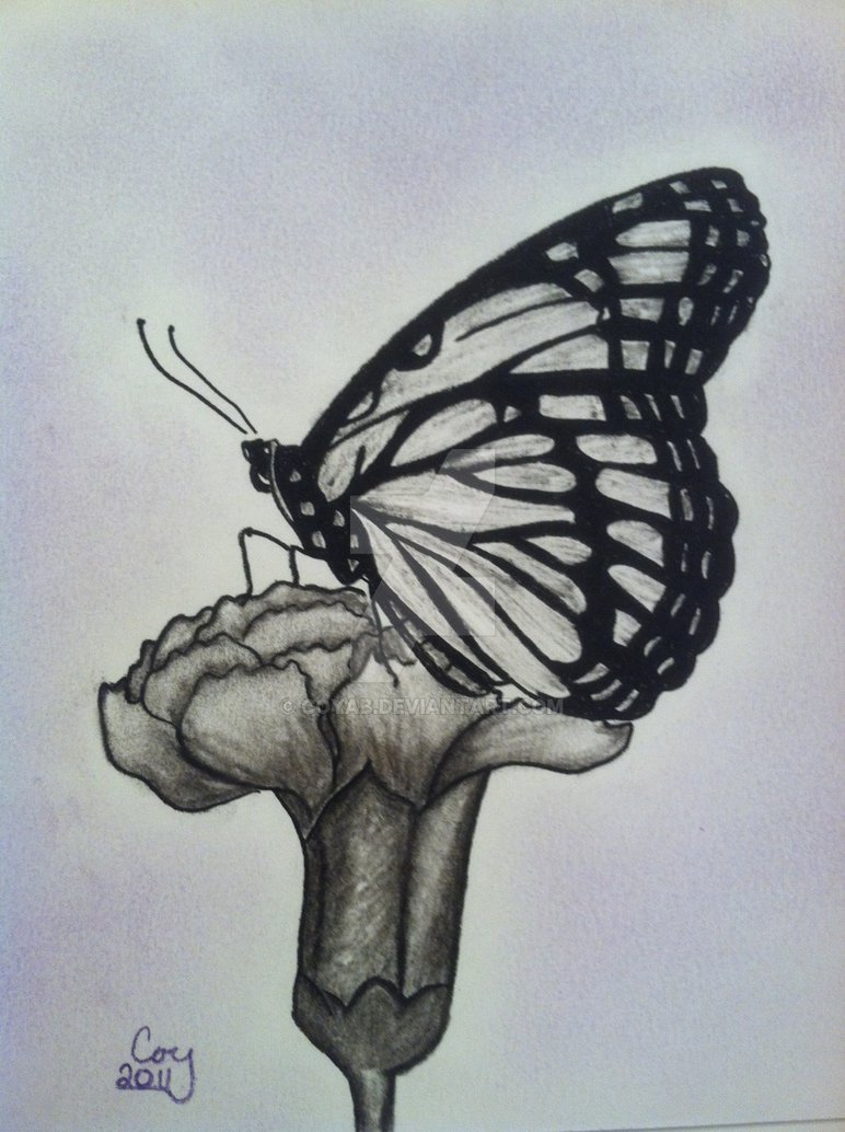 772x1034 Butterfly And Flower Charcoal Drawing By Coyab It's A Draw