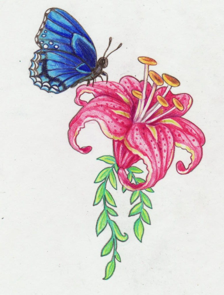 how to draw a butterfly sitting on a flower