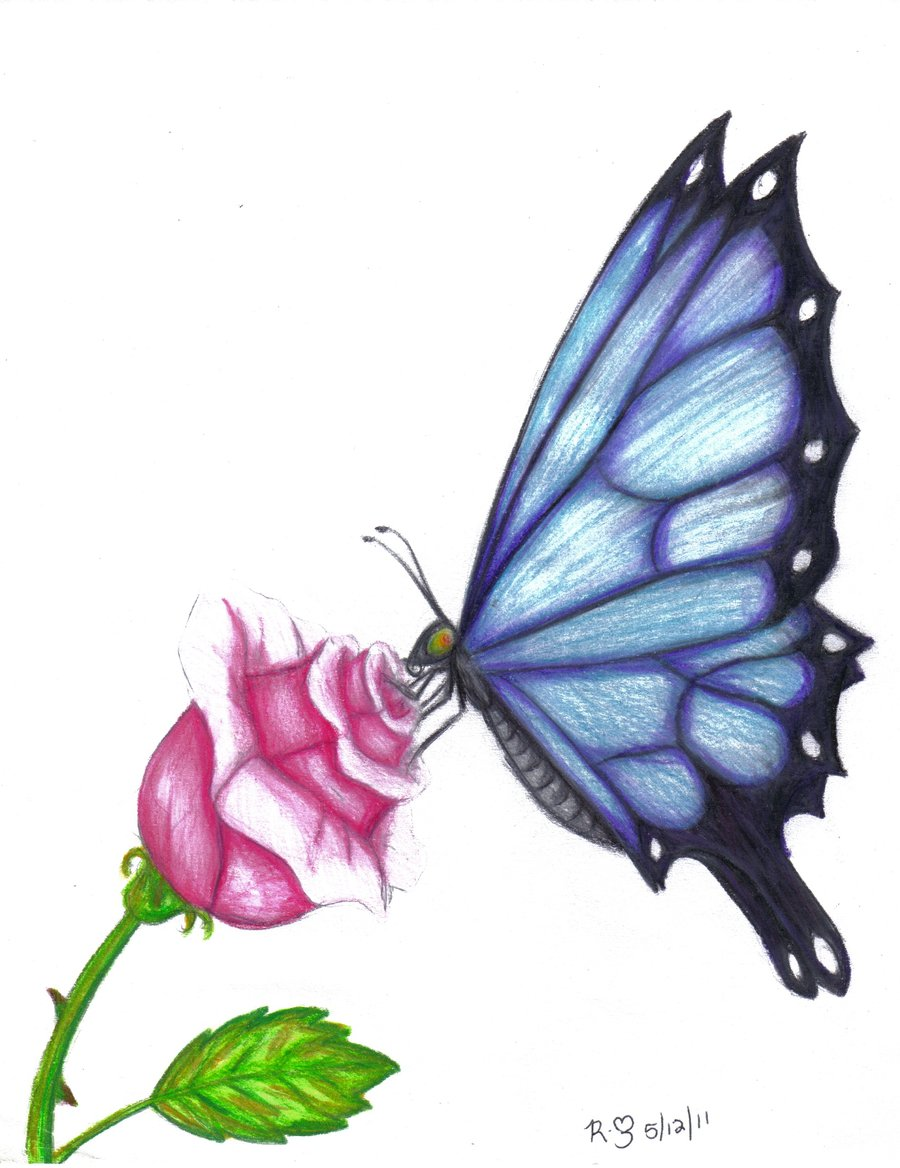 900x1168 Butterfly Drawings In Color Butterfly Rose By Evolra Traditional