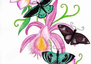 300x210 Drawings Of Butterflies And Flowers