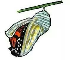 236x202 A Butterfly Coming Out Of Cocoon My Pictures )